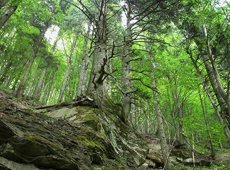 LA VIA DELLE FORESTE: IL RITIRO A CONTATTO CON LA NATURA SOSTENUTO DA MONTURA